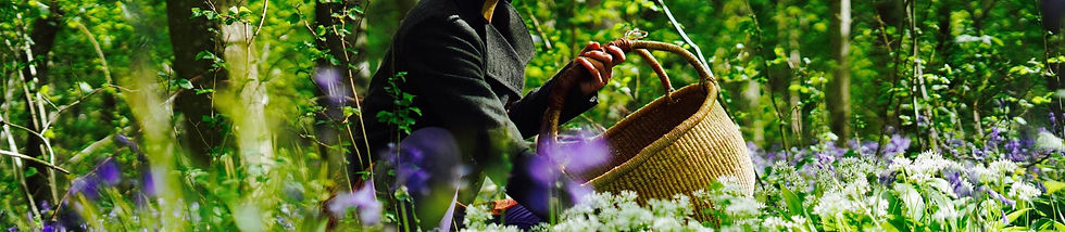 Hejgro Plant Based Foraged Products CONTACT.jpg
