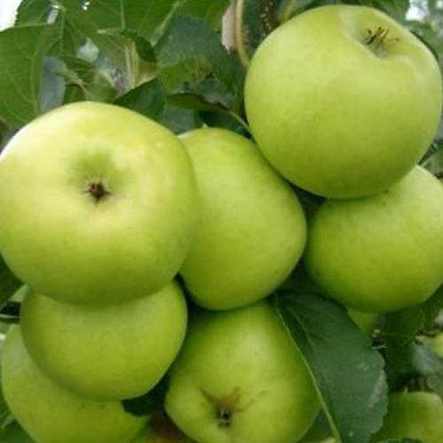 70cl Grenadier Apple Juice