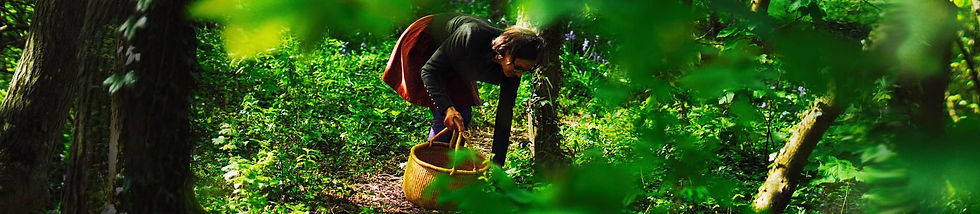 Hejgro Plant Based Foraged Products ABOUT.jpg