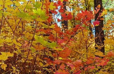 Sedona Fall Hikes