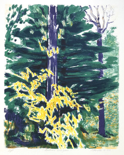Autumn Evergreen, 1979