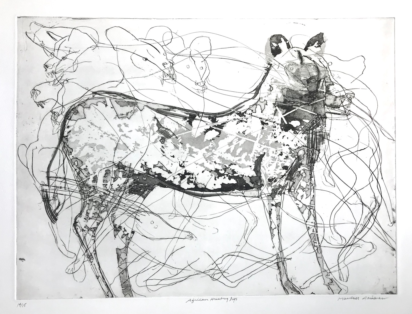 African Hunting Dog, 2007