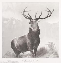 Monarch of the Glen, 1951-1985