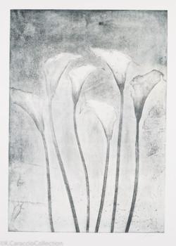 Six Calla Lillies, 2011