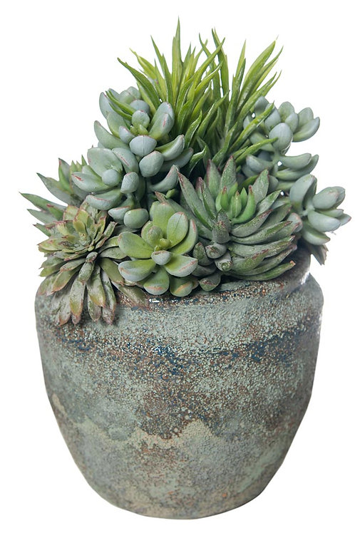 Mixed Succulent Blue