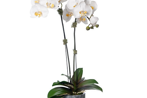 Double White Orchid Gray Marble