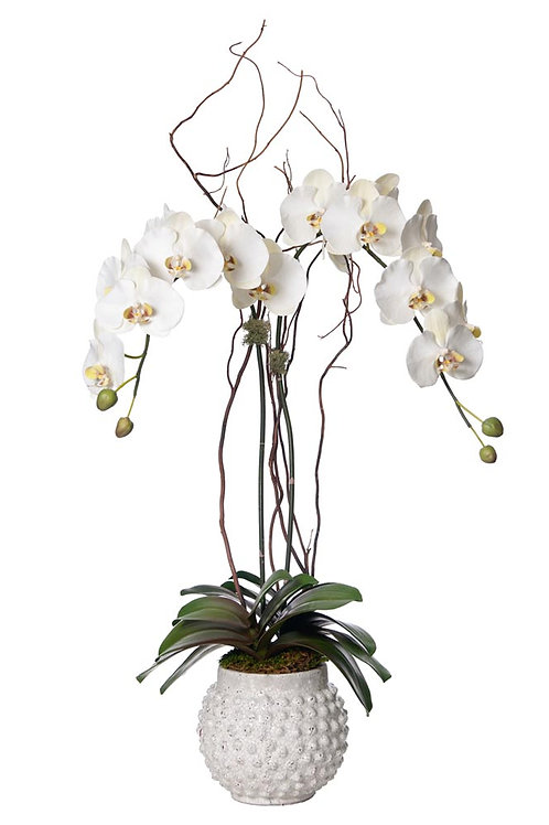 Double White Orchid (Set of 2)