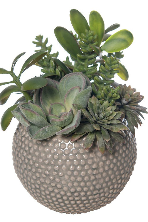 Mixed Succulent Gray