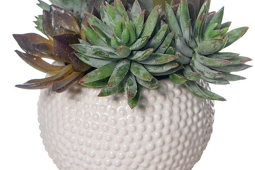 Mixed Succulent White