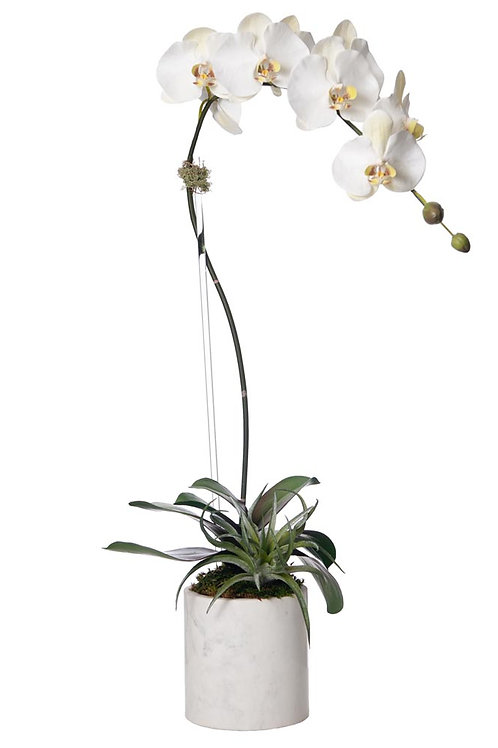 Single White Orchid White Marble