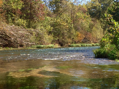 Mid-Missouri Trout Unlimited Action Alert - Stop the Sale of Eleven Point State