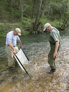 Saining the creek for insects.jpg