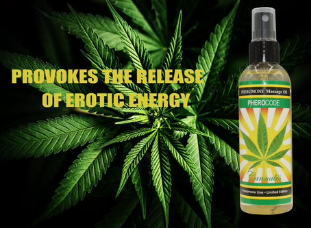 Cannabis Massage Oil Pheromones&Aphrodisiacs for Men and Women. Pleaseantly intoxicating...