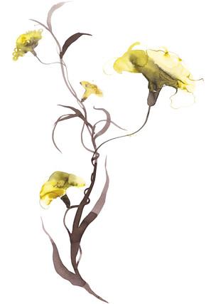 Yellow carnation_Aarhus theater_watercolor.jpg