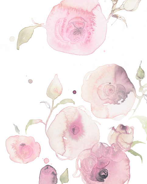 Engelsk rose, skulle være brugt til emballage 2020