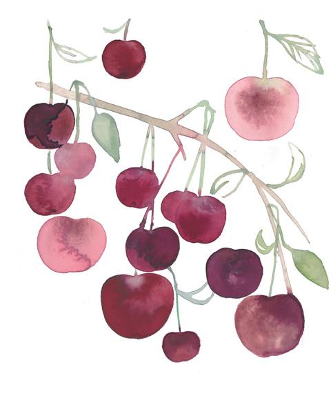 Kirsebær, skulle være brugt til emballage 2020
