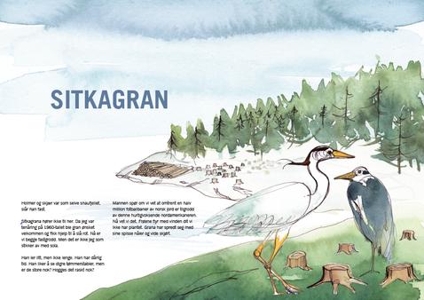 Sitkagran - ikke guide.png