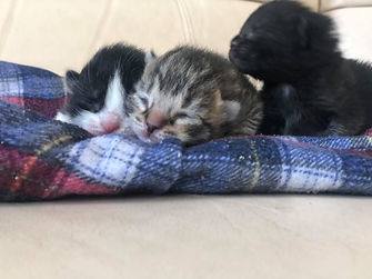 b kittens 1.jpg