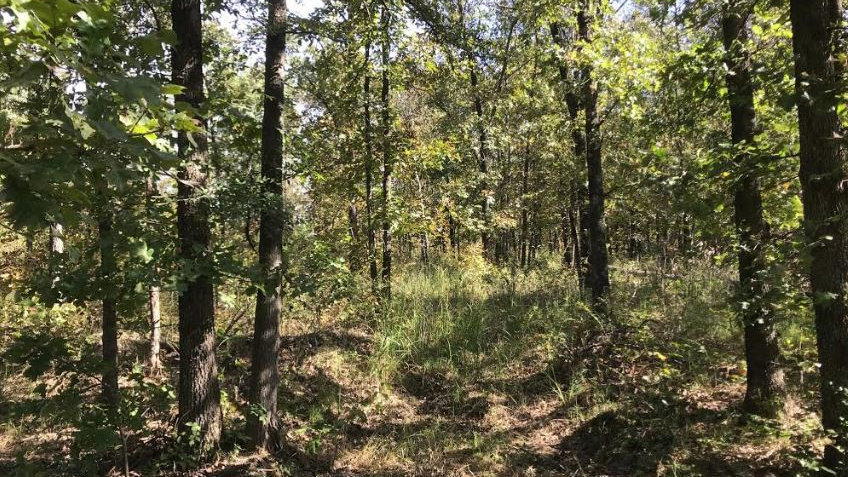 Hughes County Oklahoma 10 Acre - Great Hunting Property
