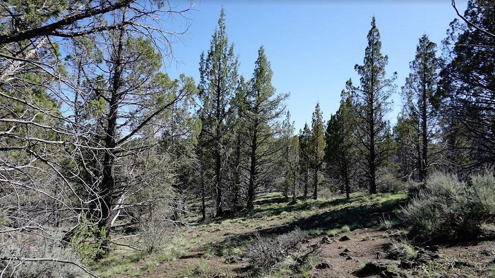 20 Heavily Treed Acres in Klamath County Oregon