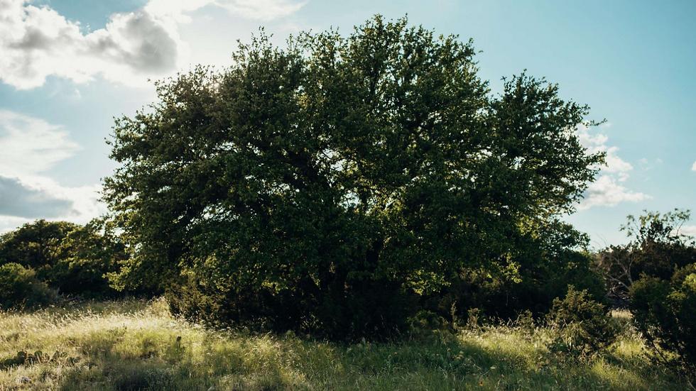 88 Acres In Sonora Texas