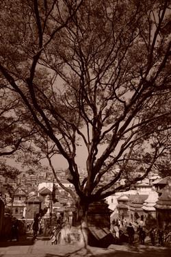 Bodhi Tree 2015