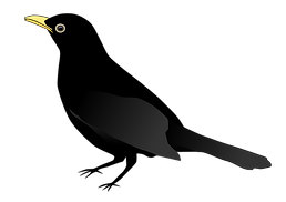 Blackbird-PNG-Pic.png