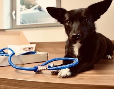 Retrieverleine - Dogs Jewellery
