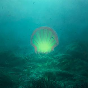 """The big Shell"""