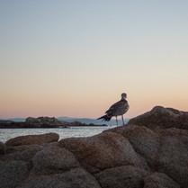 sunset_watcher.jpg