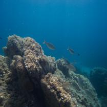 underwater_fishes.jpg