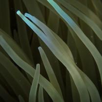 sea_plant_02.jpg