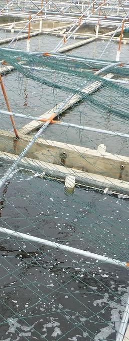 HuiAn_-_Chongwu_-_S201_-_aquaculture_pon