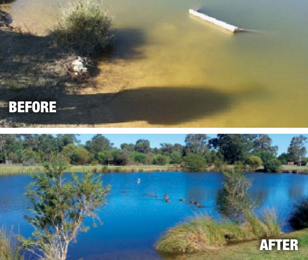 Save our Birds Mandurah City Council was removing dead birds (from Botulism) in their lakes every week.