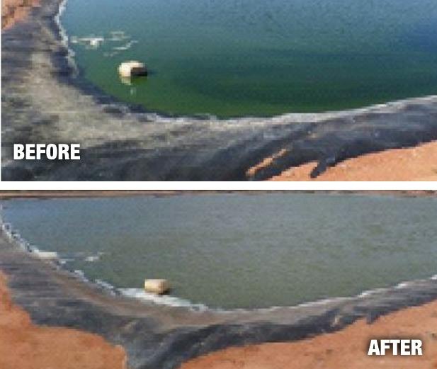 Aspen Parks & Resorts Monkey Mia Resort Surge Ponds Test Cyanobacteria (Blue Green Algae) Bloom
