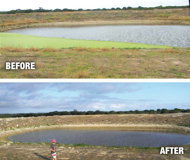 Saving Farm Water Eliminating Cyanobacteria (Blue Green Algae) Bloom and Cleaning the Farm Dam to allow the livestock to Drink