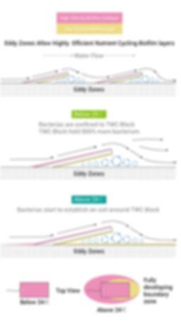 How_Biofilm_Works.jpg