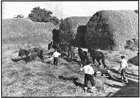 Threshing Stone being used/Goessel Museum
