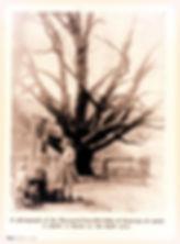 Historic Oak Tree photo   Mennonite Life