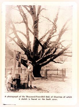 Historic Oak Tree photo | Mennonite Life