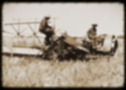 Bindering wheat in KS | Goessel Museum