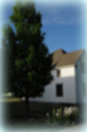 English Oak tree at Goessel Museum