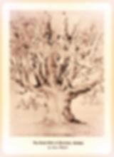 Sketch of HIstoric Oak Tree in Chortitza, Ukraine