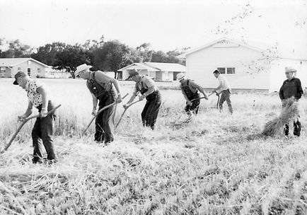 Men using sythes to cut wheat  | Goessel Museum