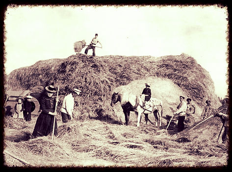 Threshing wheat in Russia | Goessel Museum
