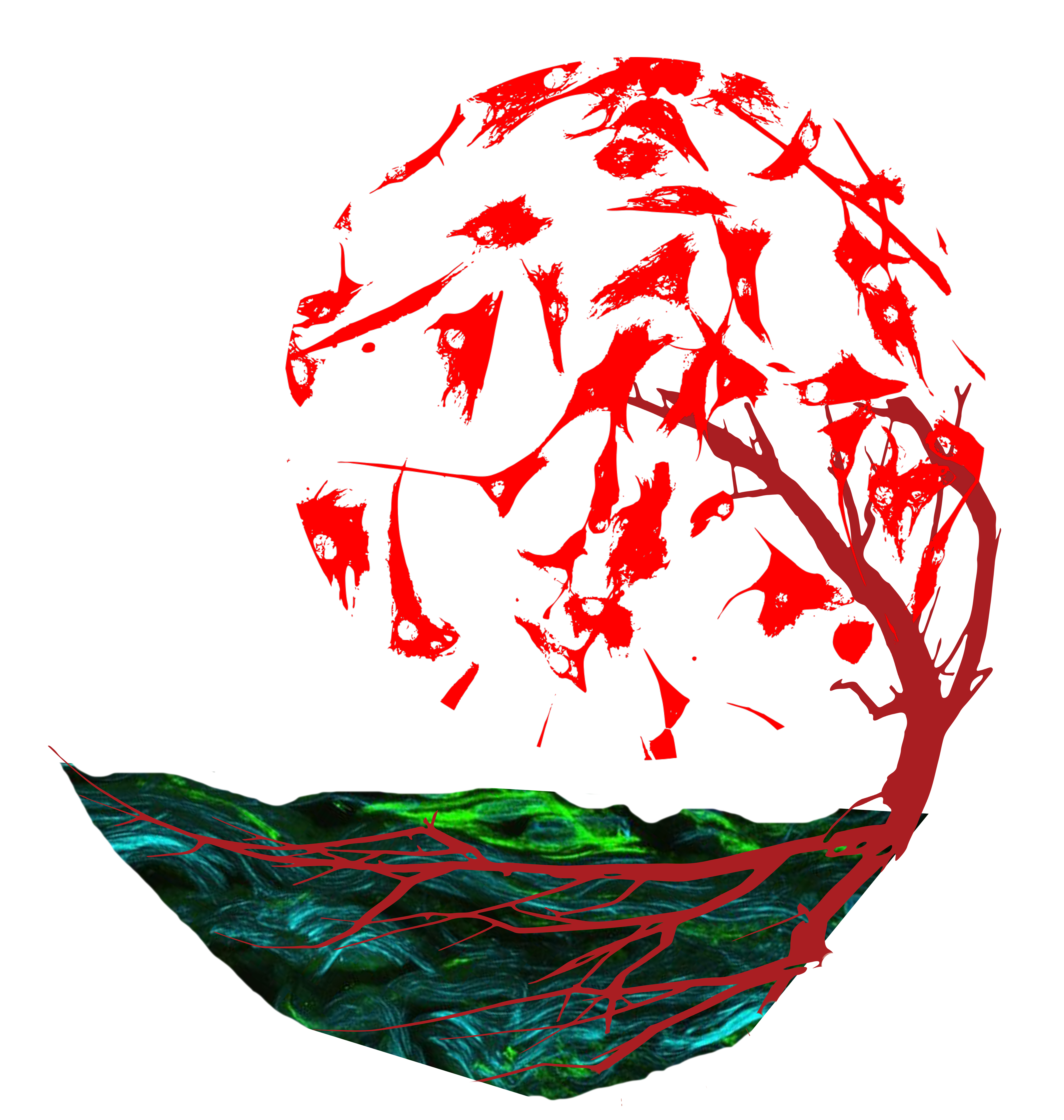 Fibroblast tree