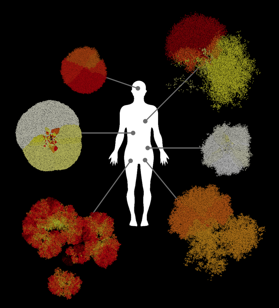 Metastatic heterogeneity