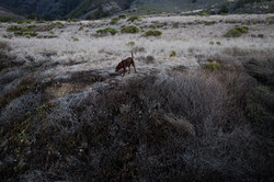 The Hunter, Big Sur, California, USA
