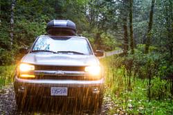 Siuslaw National Forest, Oregon, USA