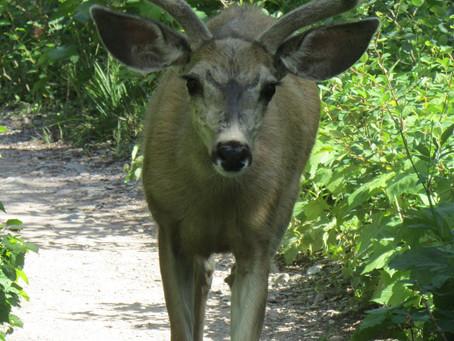 An Introduction to Spirit Animals